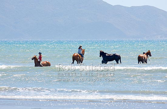 Horse riders riding their horses in the sea at the beach, Peka Peka Beach, Kapiti Coast District, Wellington Region, New Zealand (NZ) stock photo.