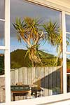Cabbage tree reflected in window