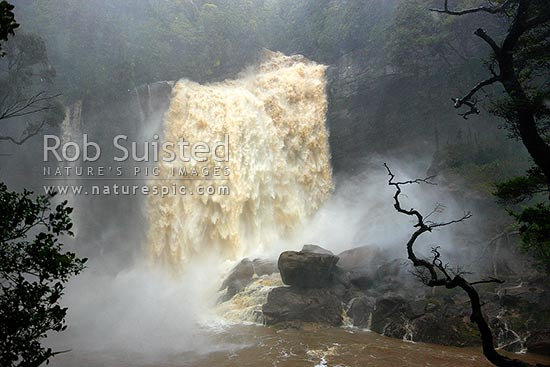 Spectacular waterfall in heavy flood and storm, Mangatini Falls on the Charming Creek Walkway track. Flooding from heavy rain and wind, Ngakawau, Buller District, West Coast Region, New Zealand (NZ) stock photo.
