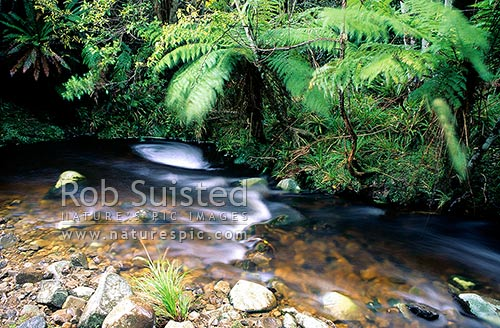 Creek running through forest, Paraparaumu, New Zealand (NZ) stock photo.