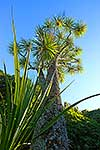 Flax & cabbage tree against sky