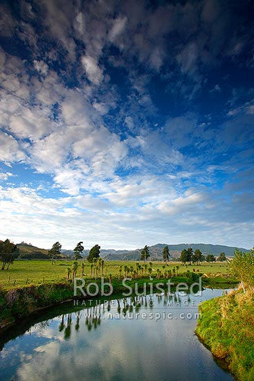 Marokopa River slowing winding through scenic lush farmland with beautiful evening light, cloud and cabbage tree (Cordyline australis) reflections, Marokopa, Waitomo District, Waikato Region, New Zealand (NZ) stock photo.