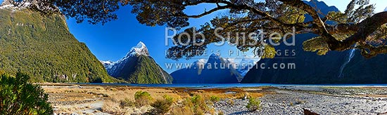 Mitre Peak in Milford Sound. Mitre Peak left (1683m), Stirling Falls centre, The Lion (1302m) and Mt Pembroke (2015m) centre right. Panorama under beech trees, Milford Sound, Fiordland National Park, Southland District, Southland Region, New Zealand (NZ) stock photo.