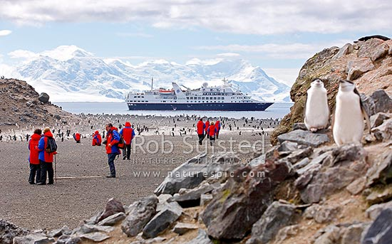 Silversea Cruises Prince Albert II Expedition Ship and guests at Baily Head, with Chinstrap Penguins (Pygoscelis antarcticus) colony, Deception Island, Antarctica Region, Antarctica stock photo.