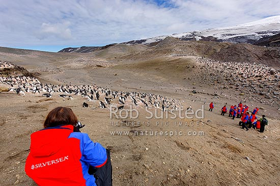 Silversea Cruises guest from the Prince Albert II Expedition Ship at giant Chinstrap Penguins (Pygoscelis antarcticus) colony at Baily Head, Deception Island, Antarctica Region, Antarctica stock photo.