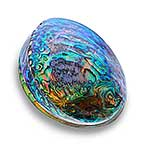 Native New Zealand Paua shell