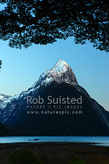 Mitre Peak in Milford Sound Fiordland. Mitre Peak (1683m) with winter snow in clam pre-dawn, Milford Sound, Fiordland National Park, Southland District, Southland Region, New Zealand (NZ) stock photo.