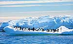 Group of penguins on ice floe
