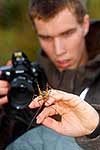 Photographing native Cave Weta
