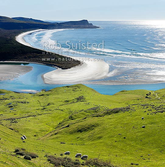 Looking across farmland to Okia Flat, Victory Beach and Wickliffe Bay to Te Whakarekaiwi Point. Papanui Inlet centre. Square format, Otago Peninsula, Dunedin City District, Otago Region, New Zealand (NZ) stock photo.