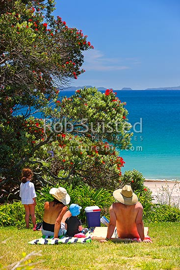 Family picnic and lunch at Hahei beach in summertime holidays under a flowering pohutukawa tree, Hahei, Coromandel Peninsula, Thames-Coromandel District, Waikato Region, New Zealand (NZ) stock photo.