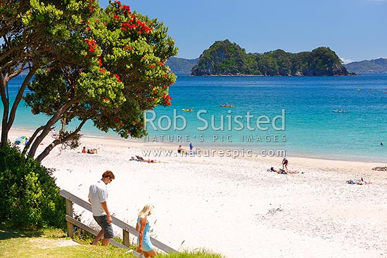 Hahei beach in summertime with flowering pohutukawa tree with a young couple, swimmers, sea kayakers, sunbathers enjoying the holidays, Hahei, Coromandel Peninsula, Thames-Coromandel District, Waikato Region, New Zealand (NZ) stock photo.