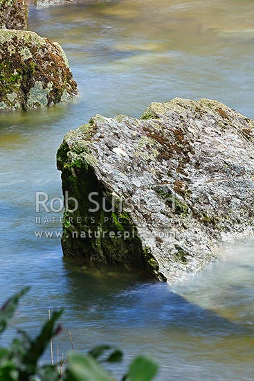 Lichen and moss covered rock in the middle of river rapids blurred with fast flowing water movements. Buller River, New Zealand (NZ) stock photo.