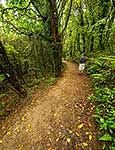 Northern Walkway, Mount Kaukau