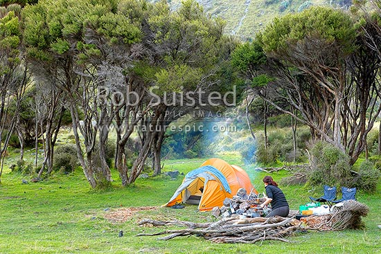 Holiday tent camping, with a woman preparing a fire for cooking and bbq, amongst manuka forest and grassland, near the coast, Cape Palliser, South Wairarapa District, Wellington Region, New Zealand (NZ) stock photo.