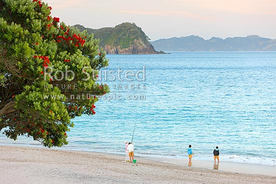 Tourist visitors family enjoying fishing for dinner at dusk on Hahei Beach with flowering pohutukawa trees in foreground, Hahei, Coromandel Peninsula, Thames-Coromandel District, Waikato Region, New Zealand (NZ) stock photo.