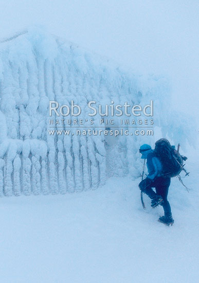 Climber in winter storm conditions with blizzard and gales on Mount Taranaki's Fantham's Peak, nearing a iced up Syme hut in whiteout, Egmont National Park, Taranaki, Stratford District, Taranaki Region, New Zealand (NZ) stock photo.
