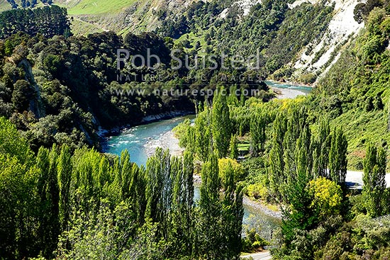 Rangitikei River, papa cliffs, poplar trees and forest (on the North Island main truck railway line), Mangaweka, Rangitikei District, Manawatu-Wanganui Region, New Zealand (NZ) stock photo.