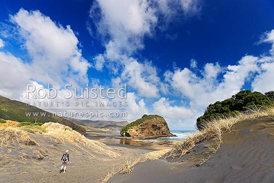 Bethells Beach with day walker walking toward Ihumoana Island from O'Neill Bay past sand dunes, Bethells Beach, West Auckland, Waitakere City District, Auckland Region, New Zealand (NZ) stock photo.