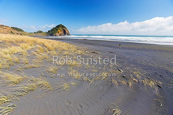 O'Neill Bay and beach with Erangi Point distant. Walker on beach near the Hillary Trail and Te Henga walkway, Bethells Beach, West Auckland, Waitakere City District, Auckland Region, New Zealand (NZ) stock photo.