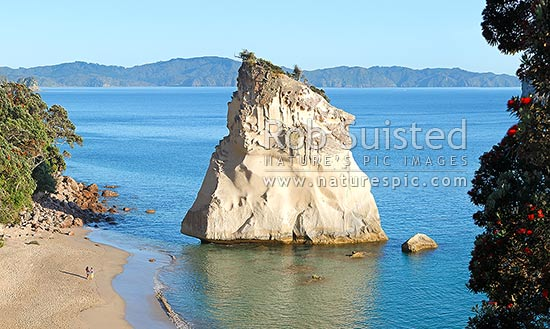 Cathedral Cove beach with people enjoying a peaceful morning, in Whanganui A Hei Marine Reserve. Pohutukawa trees, Hahei, Coromandel Peninsula, Thames-Coromandel District, Waikato Region, New Zealand (NZ) stock photo.