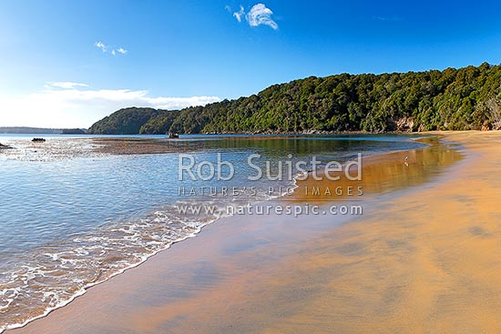 Sydney Cove beach on Ulva Island, on a calm early morning. Rakiura National Park with lone walker. Te Warawhara Marine Reserve, Ulva Island, Stewart Island District, Southland Region, New Zealand (NZ) stock photo.