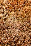 Glasswort saltmarsh texture