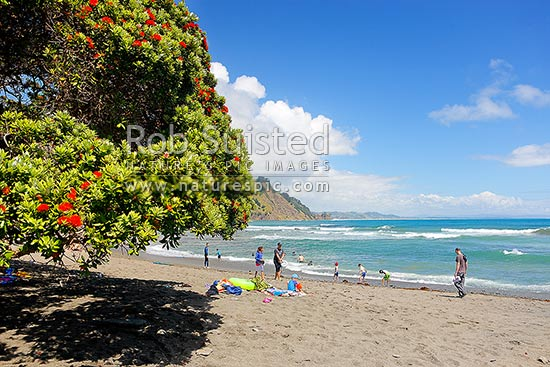 Goat Island (Cape Rodney-Okakari Point) Marine Reserve and beach with summer flowering pohutukawa trees and visitors, Leigh, Rodney District, Auckland Region, New Zealand (NZ) stock photo.