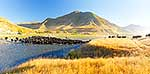 Mustering, Molesworth Station