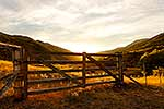 Farm gate, summer evening light