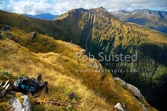 Mt Swindle (1588m) above Neilson Creek on the Thomas Range. Hunter glassing for wild deer. South Westland, Haast, Westland District, West Coast Region, New Zealand (NZ) stock photo.