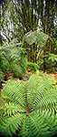NZ forest interior and tree ferns