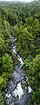 Mangawhio Stream bush, South Waikato
