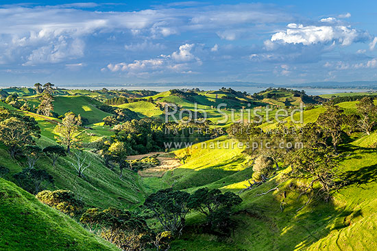 Awhitu farmland and wetlands, with Manukau Harbour and South Auckland beyond, seen from near Matakawau, Awhitu Peninsula, Papakura District, Auckland Region, New Zealand (NZ) stock photo.