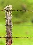 Old farm wire and batten fence