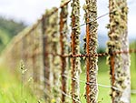 Old farm wire fence with lichen