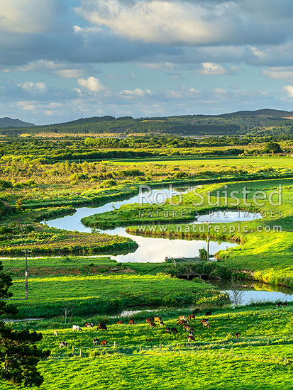Overlooking the Waikato River delta and lush dairy farm, Aka Aka, Franklin District, Waikato Region, New Zealand (NZ) stock photo.