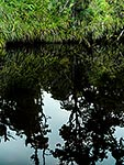Native forest and tree reflections