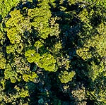 Forest canopy from above