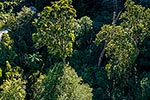 Forest canopy from above, Kaitoke