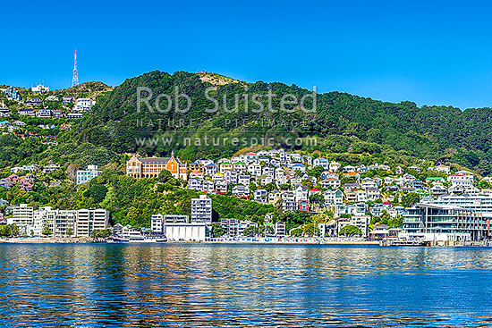 Wellington City of Oriental Bay, with villas perched on slopes of Mt Victoria. St Gerards Monastry centre right. Iconic view of well known Welligton suburb, Wellington Harbour, Wellington City District, Wellington Region, New Zealand (NZ) stock photo.