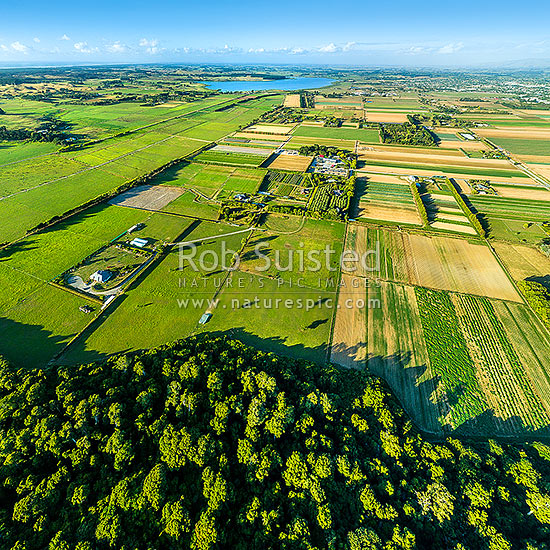 Horowhenua Plains mosaic of land use, from tradition farming to intensive market gardening, cropping and protected native forest ecosystem. Lake Horowhenua and Levin township behind. Aerial view. Lake Papaitonga. Square format, Levin, Horowhenua District, Manawatu-Wanganui Region, New Zealand (NZ) stock photo.