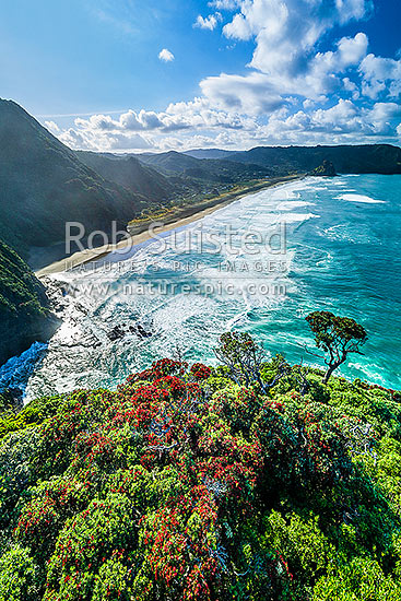 North Piha Beach, and Kohunui Bay, seen from Te Waha Point. Lion Rock and Piha Village distant. Waitakere Ranges, West Auckland, with flowering Pohutukawa trees, Piha Beach, Waitakere City District, Auckland Region, New Zealand (NZ) stock photo.