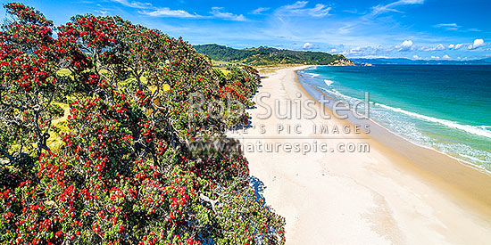 Otama Beach and Otama Bay, with flowering Pohutukawa trees lining the foreshore. Motuhua Point beyond. Aerial panorama, Otama Beach, Coromandel Peninsula, Thames-Coromandel District, Waikato Region, New Zealand (NZ) stock photo.