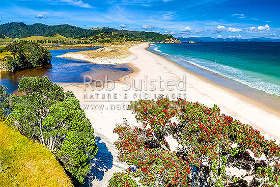 Otama Beach and Otama Bay, with flowering Pohutukawa trees lining the foreshore. Motuhua Point beyond. Aerial view over Otama River dune lake, Otama Beach, Coromandel Peninsula, Thames-Coromandel District, Waikato Region, New Zealand (NZ) stock photo.