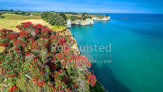 Pukearuhe, with Pariokariwa Point (top centre) and Opourapa Island beyond, with flowering pohutukawa trees above Whitecliffs. Aerial view over coast, North Taranaki Bight, Uruti, New Plymouth District, Taranaki Region, New Zealand (NZ) stock photo.