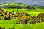 Waikato farmland and forest remnants