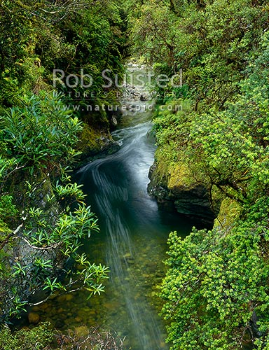Looking into Monkey Puzzle Gorge, South Westland, Westland District, West Coast Region, New Zealand (NZ) stock photo.