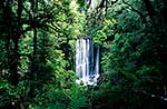 Korokoro Falls and forest, Te Urewera NP