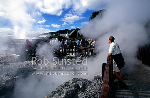 Purerehua geothermal boiling hot pools at Whakarewarewa thermal village, Rotorua, Rotorua District, Bay of Plenty Region, New Zealand (NZ) stock photo.